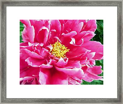 Gram's Peony Framed Print by JAMART Photography