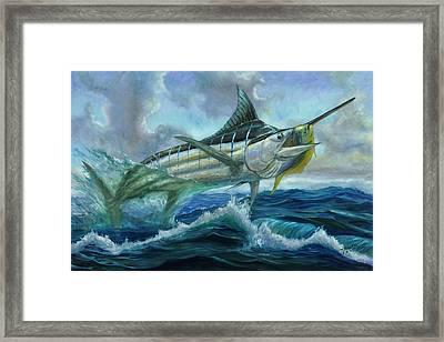 Grand Blue Marlin Jumping Eating Mahi Mahi Framed Print by Terry  Fox