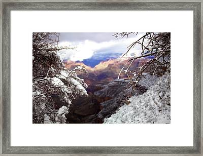 Framed Print featuring the photograph Grand Canyon Branch by Lucian Capellaro