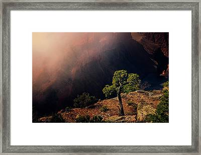 Grand Canyon Juniper Framed Print