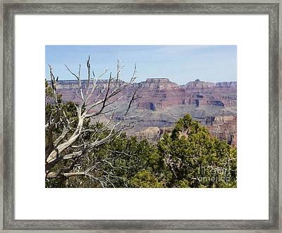 Grand Canyon National Park South Rim Framed Print
