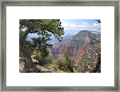 Grand Canyon North Rim - Through The Trees Framed Print