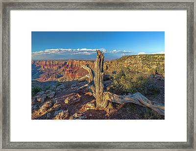 Framed Print featuring the photograph Grand Canyon Old Tree by Steven Sparks