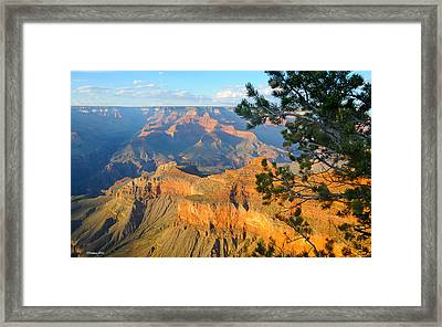 Grand Canyon South Rim - Pine At Right Framed Print