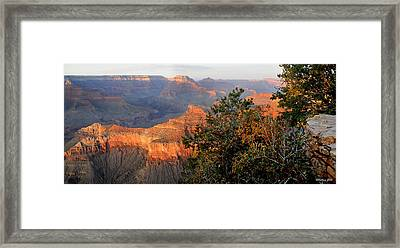 Grand Canyon South Rim - Red Berry Bush Along Path Framed Print