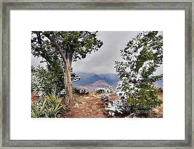 Grand Canyon Through The Trees Framed Print by Debby Pueschel