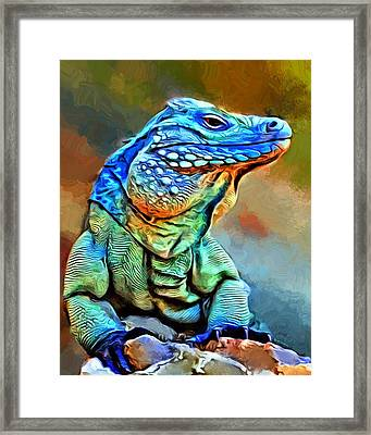 Grand Cayman Iguana Portrait  Framed Print
