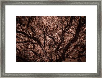 Framed Print featuring the photograph Grand Daddy Oak Tree In Infrared by Louis Ferreira