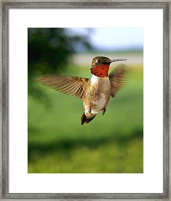 Grand Display Framed Print by Bill Pevlor