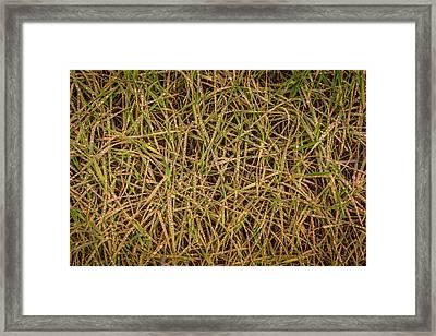 Grand Falls Grass Framed Print