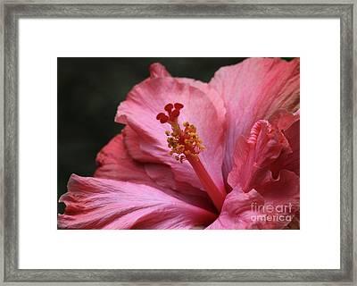Grand Hibiscus Framed Print by Sabrina L Ryan