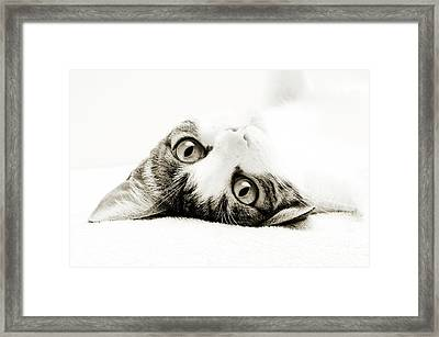 Grand Kitty Cuteness Bw Framed Print