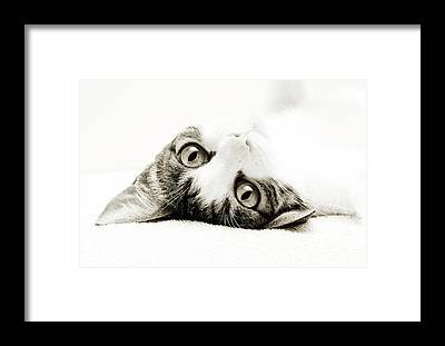 Andee Design White Framed Prints