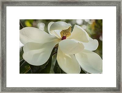 Framed Print featuring the photograph Grand Magnolia  by Julie Andel