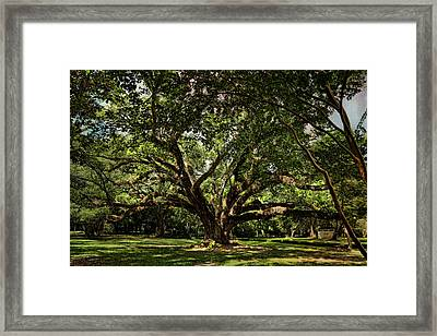 Grand Oak Tree Framed Print
