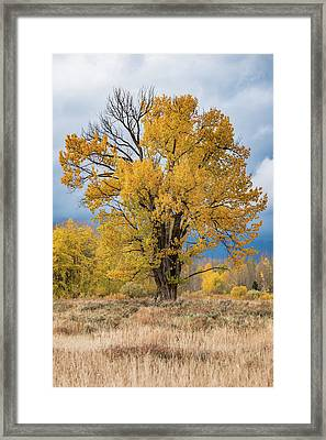 Framed Print featuring the photograph Grand Old Tree by Chuck Jason