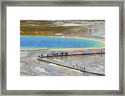 Grand Prismatic Spring Framed Print by Teresa Zieba