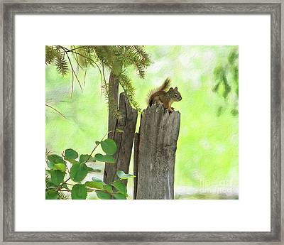 Grand Teton Chipmunk Framed Print by Stephen Schwiesow