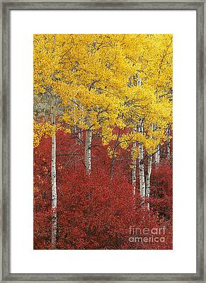 Grand Teton Viii Framed Print by John Blumenkamp