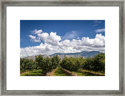 Grand Valley Orchards Framed Print by Teri Virbickis