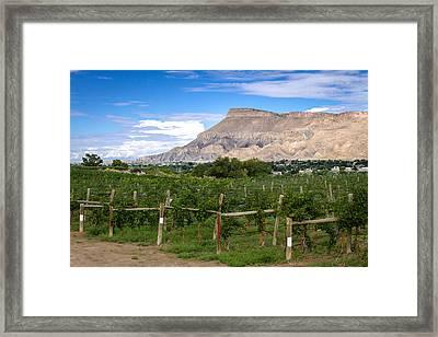 Grand Valley Vineyards Framed Print by Teri Virbickis