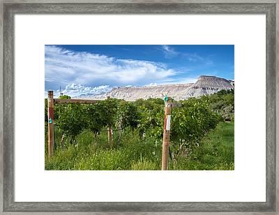 Grand Valley Wine Vineyards Framed Print by Teri Virbickis