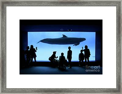 Grand Whale Framed Print by Tatsuya Atarashi