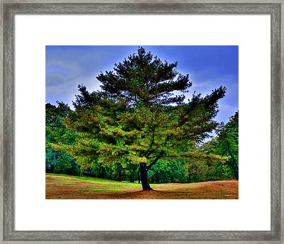 Grandad Framed Print by Michael Putnam