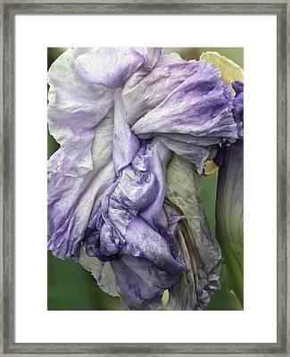 Grande Dame  Framed Print by Pamela Patch