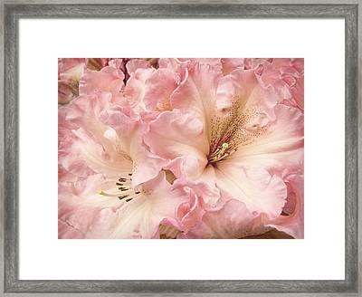 Grandeur Rhododendron Flowers Framed Print
