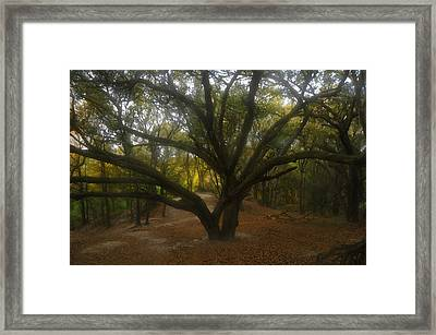 Grandfather Oak Framed Print by David Lee Thompson