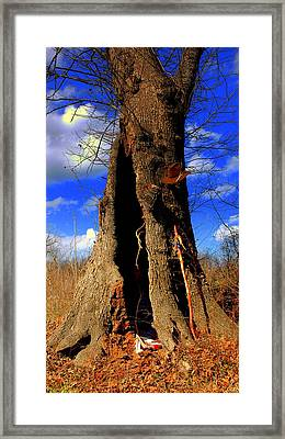Framed Print featuring the photograph Grandfather Tree by Kicking Bear  Productions