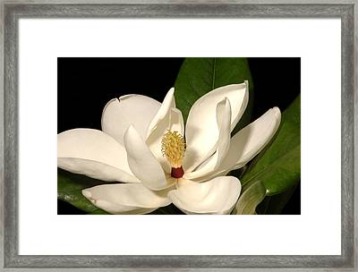 Grandiflora Framed Print by Greg and Chrystal Mimbs