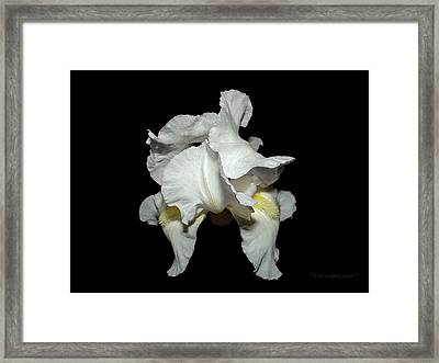 Grandma's White Iris Framed Print
