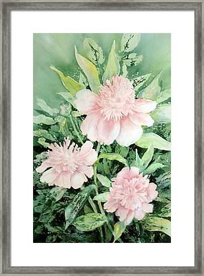 Grandmother's Garden Framed Print