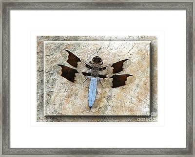 Granite Dragon Framed Print
