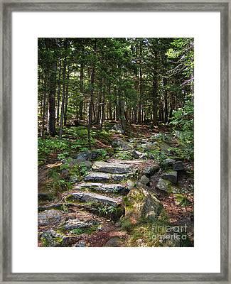 Granite Steps, Camden Hills State Park, Camden, Maine -43933 Framed Print