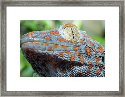 Granma What Big Eyes You Got Framed Print