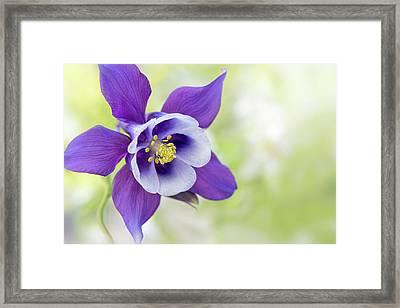 Granny's Bonnet Flower Framed Print by Jacky Parker