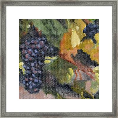 Grape Cluster Framed Print by Donna Tuten