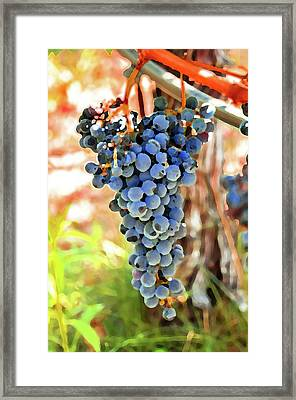 Grape Cluster Framed Print