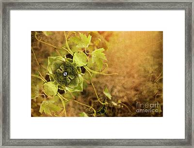 Grape Commodity Framed Print