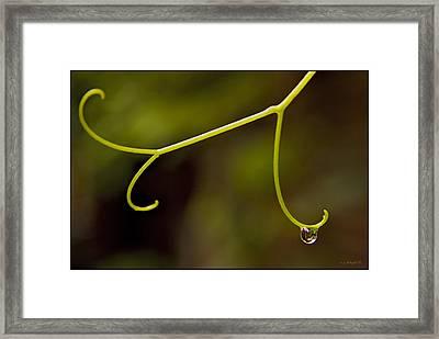 Grape Drop Framed Print by Daniel G Walczyk