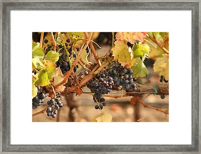 Grape Harvest Framed Print by Art Block Collections