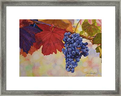 Grape Harvest Framed Print by Jan  Spangler