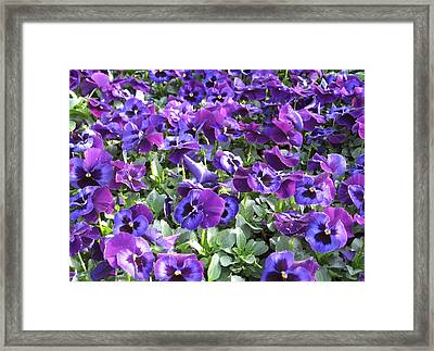 Grape Jelly Framed Print