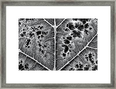 Grape Leaf Monochrome Framed Print