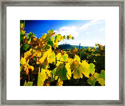 Grape Leaves And The Sky Framed Print by Elaine Plesser