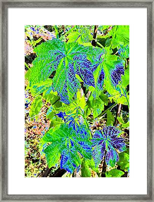 Grape Leaves Framed Print by Will Borden