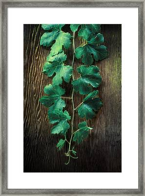 Grape Leaves Framed Print by YoPedro